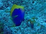 セナキルリスズメ