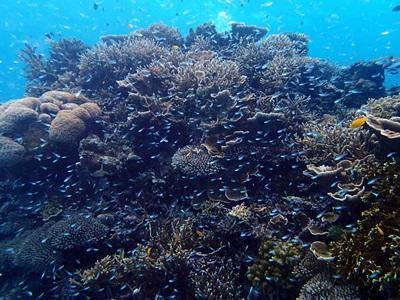サンゴとスカテンいっぱい