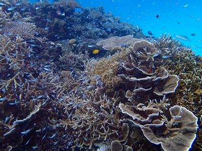 サンゴいっぱいとスカテン