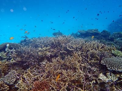 枝サンゴとお魚色々